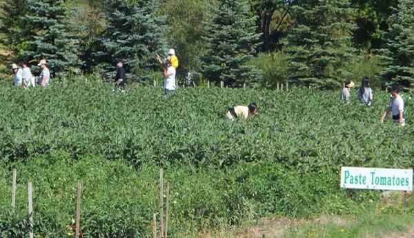 Trabajadores temporales en la agricultura.