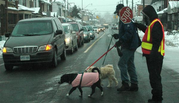 Un hombre con sus mascotas es ayudado a cruzar la calle. Foto: V.Aguilar